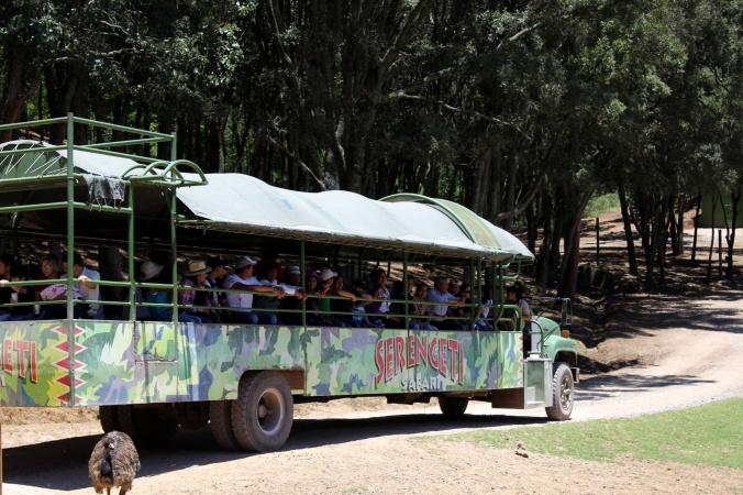 Serengeti. Transporte Masai. Bioparque estrella. Jilotepec. Mexico. Estado de Mexico
