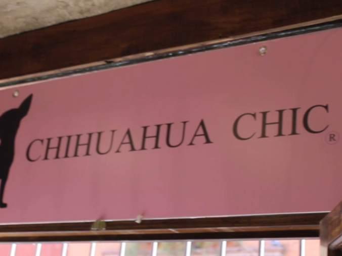 Chihuahua Chic (San Miguel de Allende)